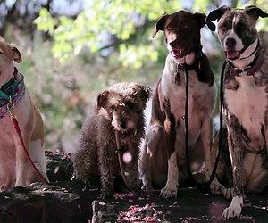 Documentaire over honden op Netflix