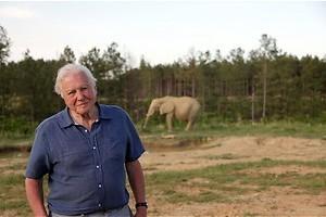 Attenborough and the giant elephant - de gigantische Jumbo