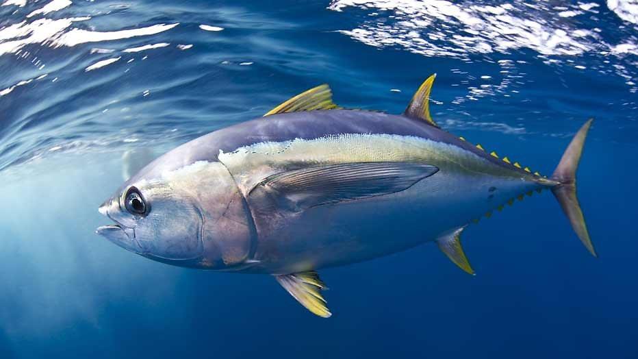 Kijktip: Kokende zee bij Costa Rica in Blue Planet II