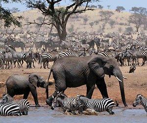 SBS6 zendt mooie documentaire BBC Wildlife: Africa uit