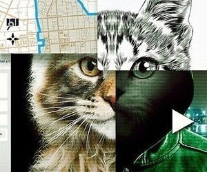 Van de documentaire Don't F**k With Cats op Netflix valt je mond open