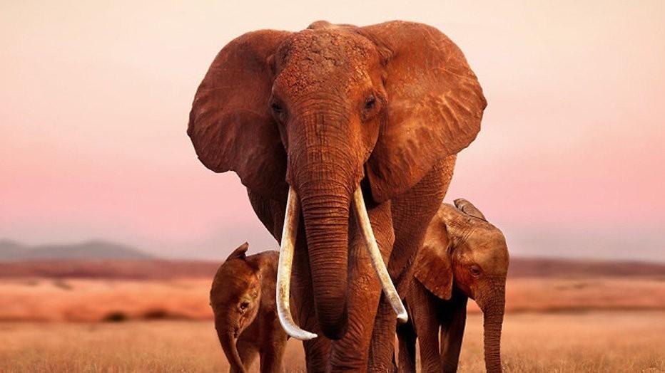 Apple TV+-tip: The elephant queen