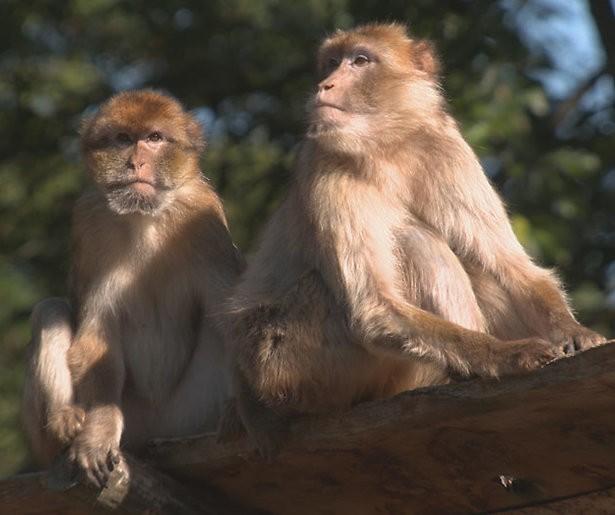 De TV van gisteren: Echte leven in de dierentuin profiteert van matige aanbod