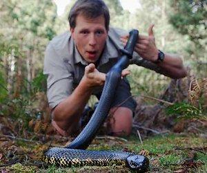 Freek Vonk nam een slang mee naar Pauw. Mag dat?