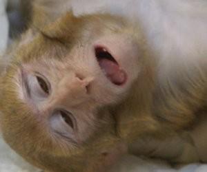 Videoland-tip: Inside the monkey lab