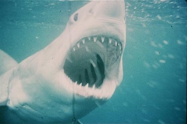 Bang voor haaien? Dat is de schuld van Steven Spielberg