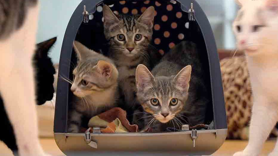 2Doc: Cat Stories