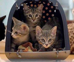 Quinty Trustfull, Miryanna van Reeden en Jort Kelder over hun katten
