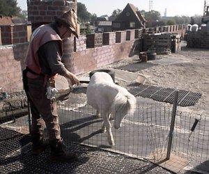 Videosnack: Man bijt hond XL op bezoek bij riddermuseum Vlotburg