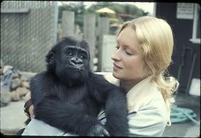 Wat denkt Koko de gorilla?