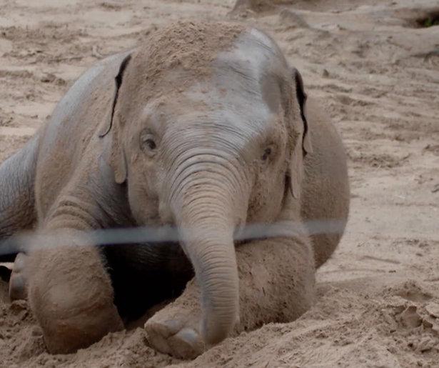 Lief! Olifanten spelen in de regen