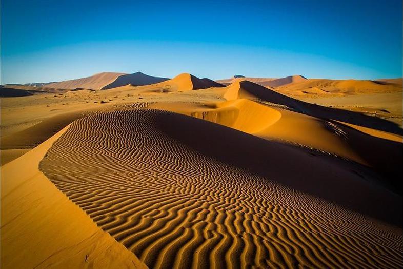 Onverschrokken woestijnkrijgers in Planet Earth II