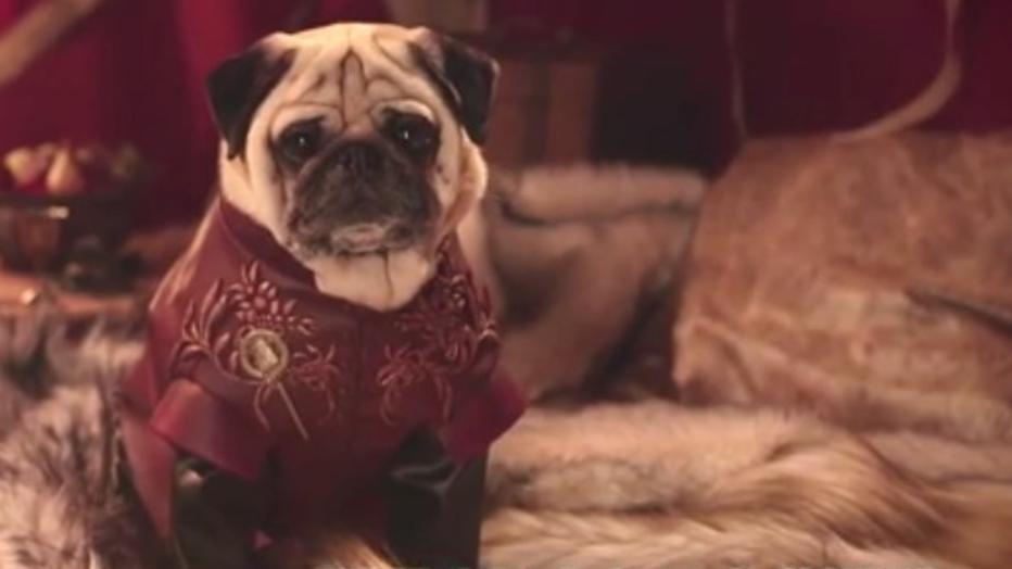 YouTube-hit: pugs maken Game of Thrones schattig