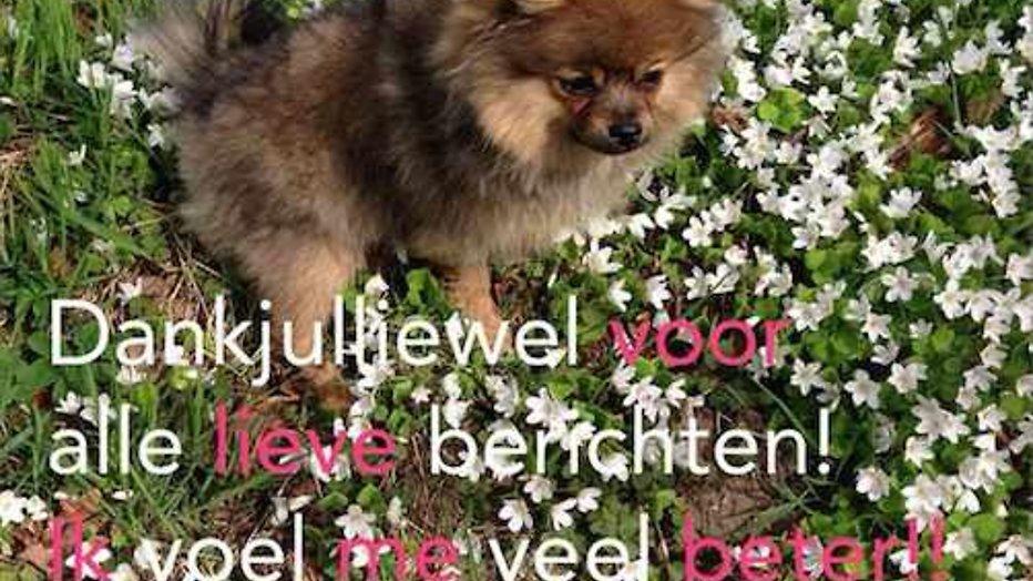 Hondje van Kim Kötter en Jaap Reesema hersteld na aanval