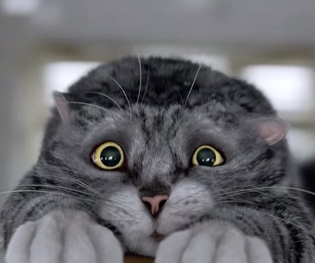 YouTube-hit: Mog de Kat redt kerst in Britse supermarktreclame