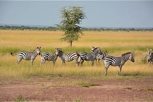 Zoektocht op de savanne