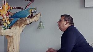 Paradijsvogels op de Veluwe