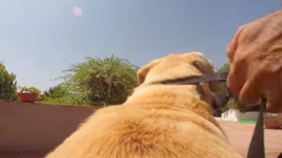 YouTube-hit: hond trekt epische sprint naar zee