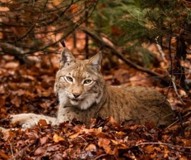 Kijktip: Groots dierenrijk in Wild France