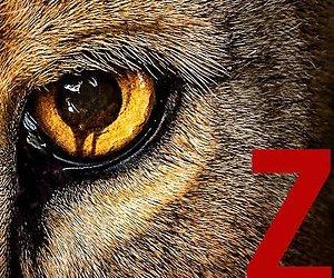 SBS 6 programmeert hitserie Zoo